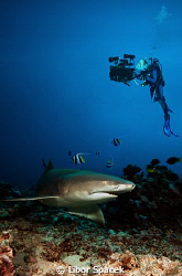 Lemon shark with my buddy Petra, who used the uw housing ... by Libor Spacek