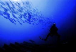 """Hanging with the Shoal"" Thistlegorm Rea Sea 2004 Sea&S... by Gavin Skipp"