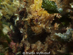 before finishing decompression, I found this scorpionfish by Martin Wynistorf