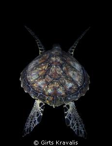 Turtle by Girts Kravalis