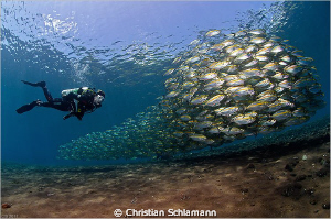 At the end of the dives at the drop off in Tulamben we of... by Christian Schlamann