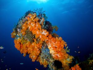 Komodo Reefs. Canon S90 by Stephen Holinski