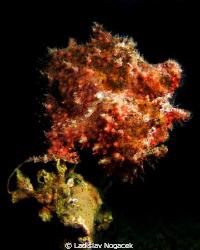 red sea flower by Ladislav Nogacek