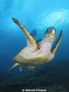 Turtle by Abimael Márquez