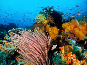 Canon S90 - Komodo Reefs by Stephen Holinski