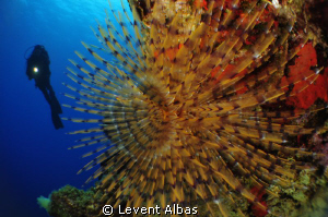 Tube form with diver. by Levent Albas