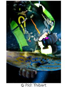 night dive /diver and file fish by Rick Thibert