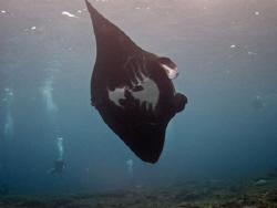Black Manta banks at Manta Point Bali - Natural Light tak... by Spencer Burrows