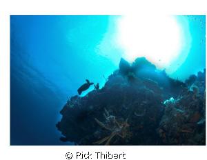 Turtle Silhouette by Rick Thibert
