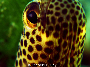 38 Minute Garden Eel - Taci Tolu, near Dili! by Marcus Culley