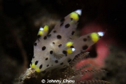 This is Pikachu's brother? , G11+6000k HID Flashlight by Johnny Chiou