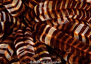 Crinoid detail, PNG by Michael Gallagher