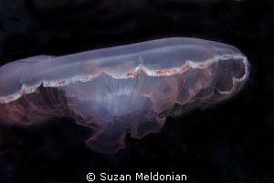 Mooon jelly by Suzan Meldonian