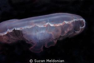 Mooon jelly by Suzan Meldonian