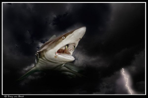 Vampire shark (Carcharhinus-draculis) Nocturnal by Dray Van Beeck