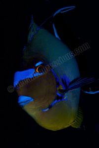 Surgeon fish caught with my macro lens on the safety stop by Barbara Schilling