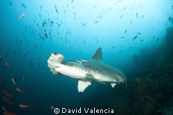 This shot was taken on Wolf Island, Galapagos where we ha... by David Valencia