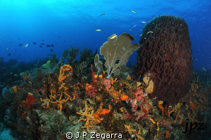 cool view of a colorfull reef... Nikon D300 Ikelite housi... by J P Zegarra