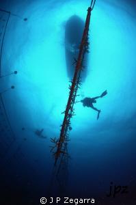 Acropora cervicornis coral farm and divers on top... Niko... by J P Zegarra