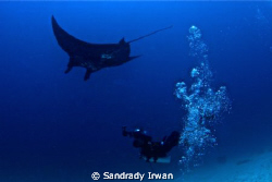 Just imagine how we shot the manta, with wide lense 10-17... by Sandrady Irwan