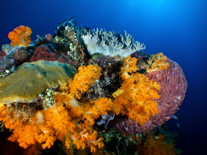 Reefs of Komodo by Stephen Holinski