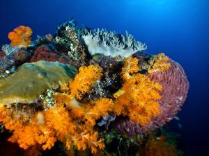 Reefs of Komodo by Stephen Holinski