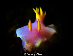 Face to face with this beautiful Nudibranch,G11 + 6000K F... by Johnny Chiou