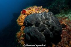 reef in the shadow insatiable sponge :-( by Roman Vyroubal