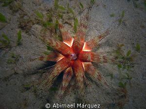 Underwater Star by Abimael Márquez