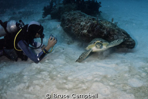 Scaring off the turtle by Bruce Campbell