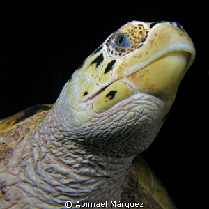 Sea ​​turtle, a look under your face, St. Thomas. by Abimael Márquez