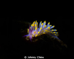 Night Dive,used G11+  flashlight for lighting. by Johnny Chiou