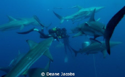 Photo taken on a shark feed by Deane Jacobs