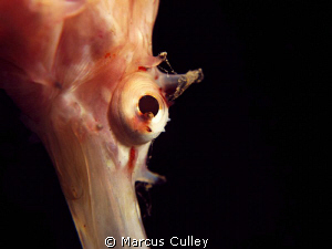 You can never have too many eye shots of seahorses!  Yet ... by Marcus Culley