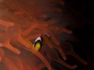 """Orange"" protection... by Alex Varani"