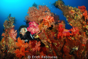 Exploring the amazing coral growth of the Liberty wreck by Erich Reboucas