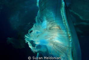 An artistic moon (jelly) by Suzan Meldonian