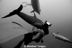 The great Dolphin in the Tiputa pass of Rangiroa (Tursiop... by Bonduel Tanguy