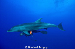 Lola (Tursiops Truncatus) & Pit... Playing along the reef... by Bonduel Tanguy
