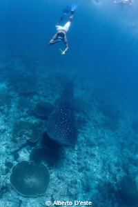 Snorkeling with Shark by Alberto D'este