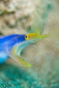 Ribbon Eel: F2.8 by Tony Cherbas