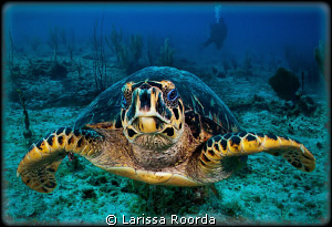 "The turtle murmured ""Would you kindly swim aside and let ... by Larissa Roorda"