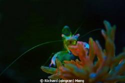 Neon shrimp by Richard (qingran) Meng