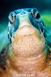tartaruga by Mario Rapini