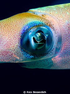 Squid Closeup by Rico Besserdich