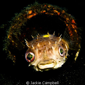 Oh...those eyes... by Jackie Campbell
