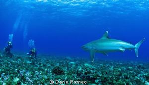 """ THREATENED ""