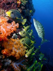 Fish Life - Komodo, Indonesia by Stephen Holinski