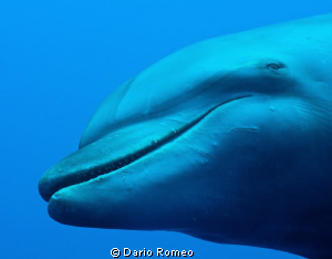 Tursiope Female