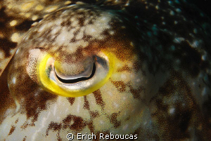 Cuttlefish Eye Shot by Erich Reboucas
